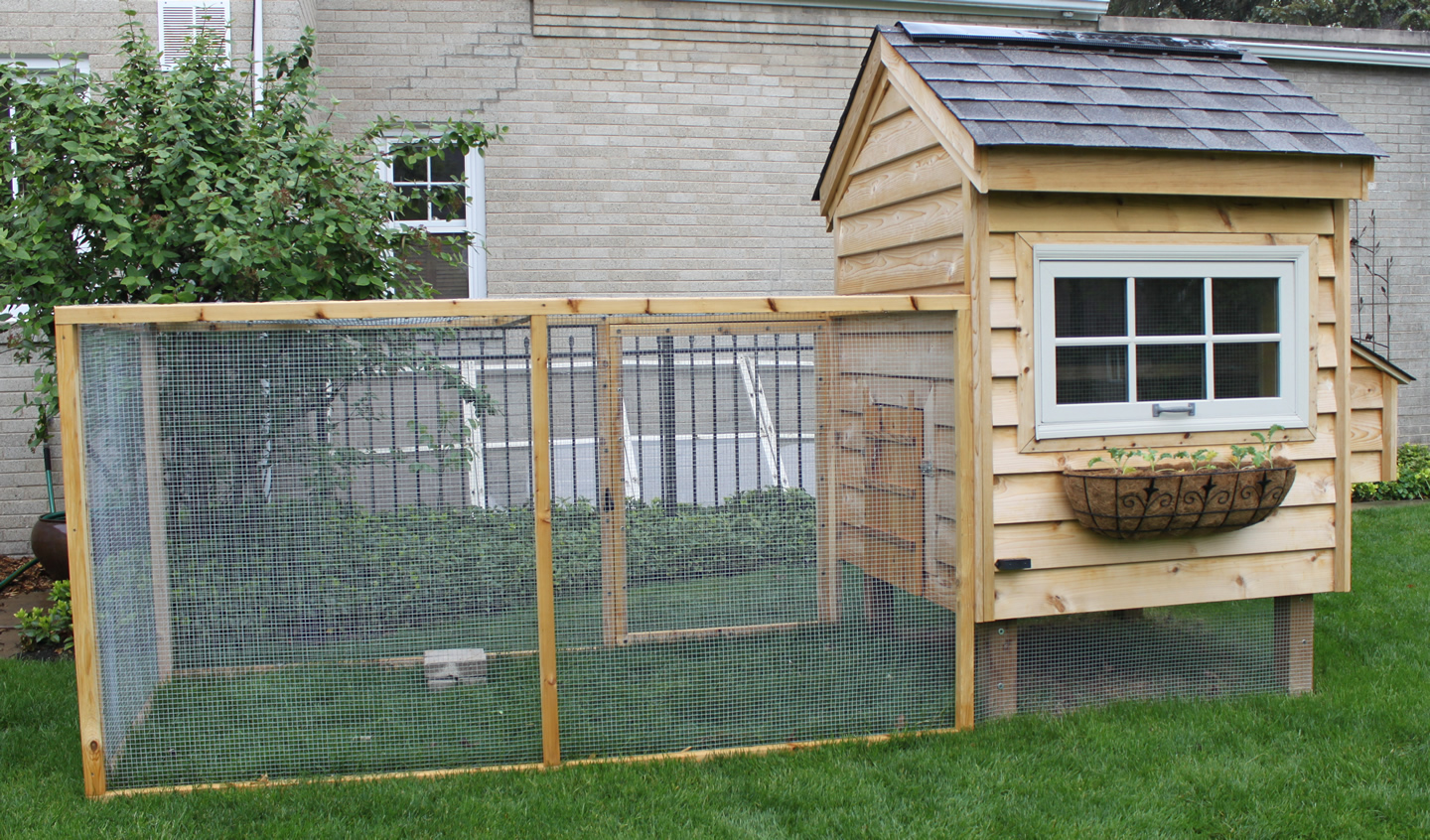 De-Fence | Ways To Protect Your Chickens from Fowl Play | Chicken Raising Tips