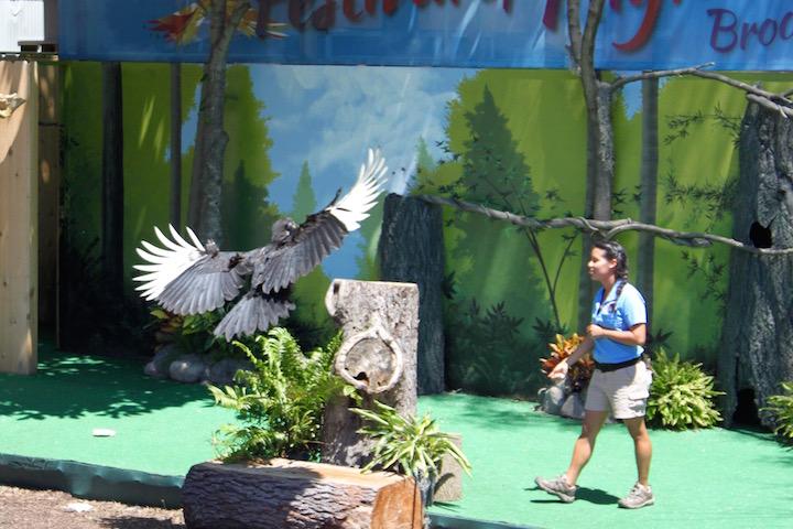 brookfield zoo festival of flight