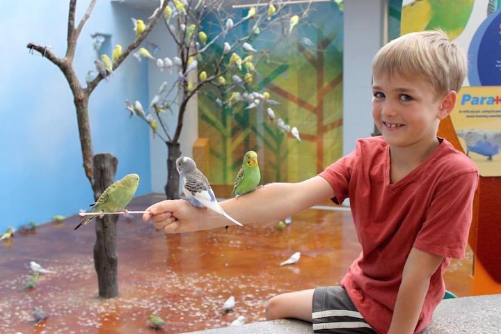 brookfield zoo wild encounters parakeets