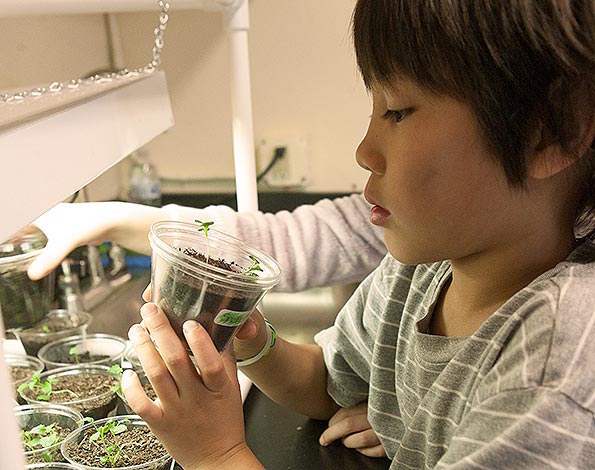 5-pre-k-science-activities-projects