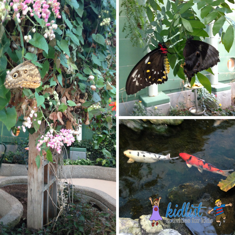 Peggy Notebaert Nature Museum in Chicago - photos of butterflies and koi fish in a pond