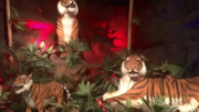Tigers at the Rainforest Cafe, a great family-friendly restaurant