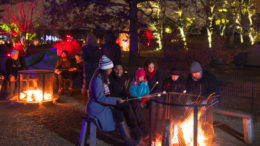 Families roast marshmallows around bonfires at the Morton Arboretum's Illumination event