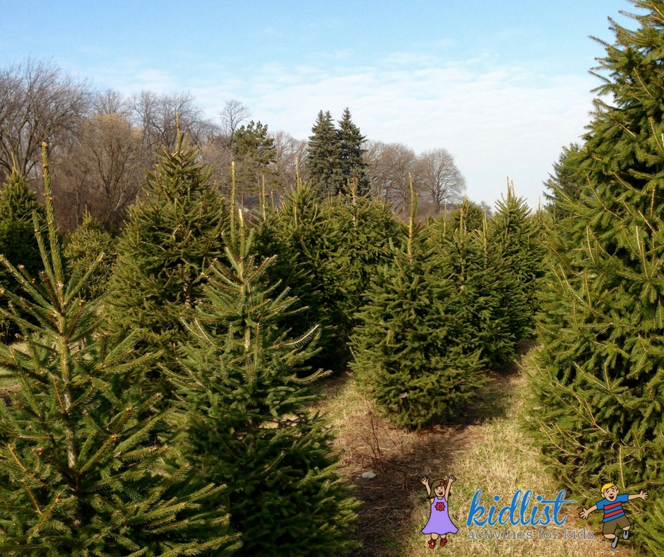 2018 Live Christmas Tree Farms: Cut Your Own (or Find a Pre-Cut Tree)