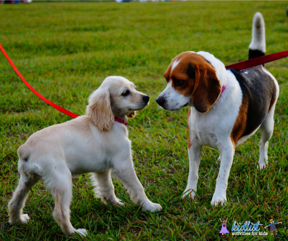 Dog Parks And Off Leash Areas In The Chicago Suburbs