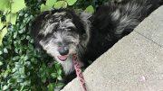 Elsie keeping cool in the summer