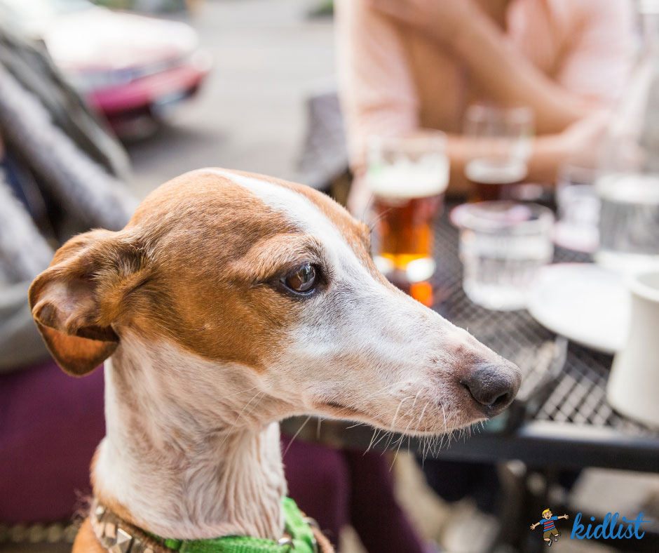 Enjoy These Dog-Friendly Restaurant Patios in the Western Suburbs!